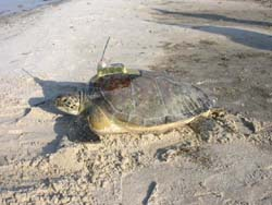photo of turtle